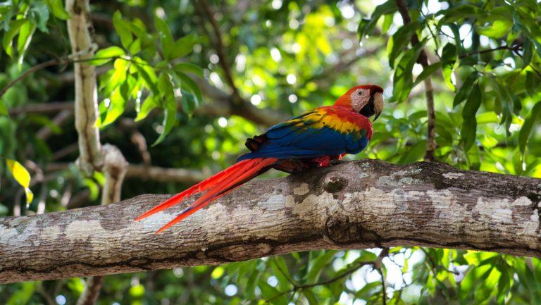 Rando au Costa Rica